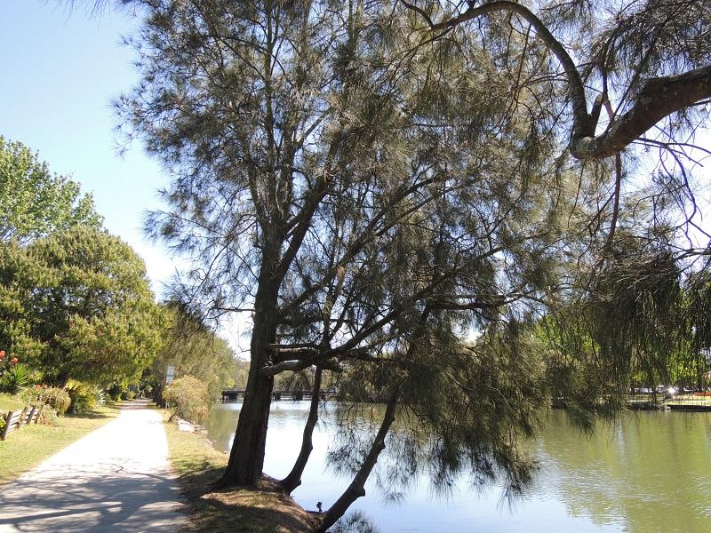 Cooks River 7